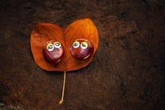 Autumn leaf two chestnut eyes. Day light stock photos