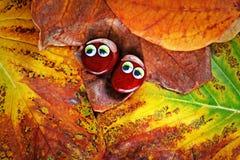 Autumn leaf two chestnut eyes. Day light royalty free stock photo