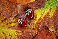 Autumn leaf two chestnut eyes. Day light royalty free stock photos
