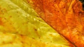 Autumn Leaf Up Close stock image