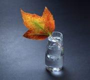 Autumn leaf in vase Stock Photo
