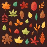Autumn leaf vector autumnal leaves falling from fallen trees leafed oak and leafy maple or leafing foliage illustration. Fall of leafage set with leafage Stock Images