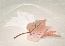 Autumn leaf. Autumn vector background with colorful leaf Royalty Free Stock Image