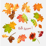 Autumn leaf vector collection Royalty Free Stock Image