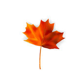 Autumn leaf - vector. Autumn leaf in orange tones - vector illustration Stock Photo
