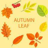Autumn Leaf Vector Set Image libre de droits