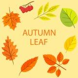 Autumn Leaf Vector Set Imagen de archivo libre de regalías