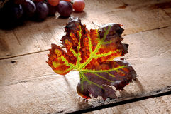 Autumn Leaf Vine Imagenes de archivo