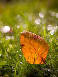 Autumn Leaf Wallpaper. An orange leave laying in the grass with bokeh Stock Photo