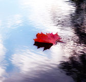 Autumn leaf on the water. A autumn leaf on the water Royalty Free Stock Photo