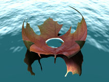 Autumn leaf on water. Close up of curled autumnal leaf floating on water, with droplet in middle Stock Photos