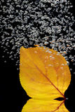 Autumn leaf in water Stock Photo