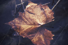 An Autumn Leaf in Water, Boulder, Colorado Stock Photos