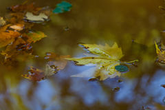 Autumn leaf in water with clouds reflections Stock Photo