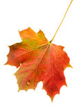Autumn leaf with water drop Stock Photo