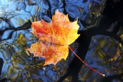 Autumn leaf on the water level Stock Photography