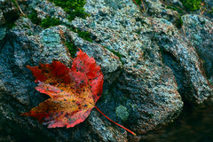 Autumn leaf by water's edge. An autumn leaf lays on a granite boulder by the water's edge Stock Photography