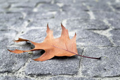 Autumn leaf wedge Stock Images