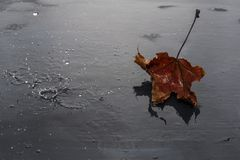 Autumn leaf on a wet dark background royalty free stock photos