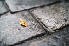 Autumn leaf on wet old granite pavement closeup Stock Photography