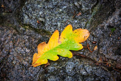 Autumn leaf on wet pavement Royalty Free Stock Photos