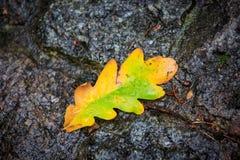 Autumn leaf on wet pavement. Wet autumn leaf on pavement at rainy day Royalty Free Stock Photos