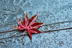 Autumn leaf on a wet wooden surface. Red autumn leaf on a wet wooden surface Royalty Free Stock Photography