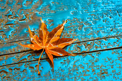 Autumn leaf on a wet wooden surface Stock Photography