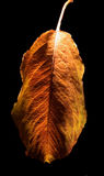 Autumn and the leaf Royalty Free Stock Photography