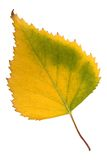 Autumn leaf on white Royalty Free Stock Image