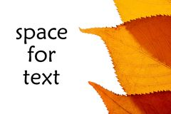 Autumn leaf with space for text Royalty Free Stock Photo