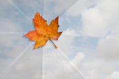 Autumn leaf on a white sky umbrella Royalty Free Stock Photo