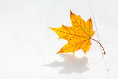 Autumn leaf on the white wooden floor Royalty Free Stock Photography