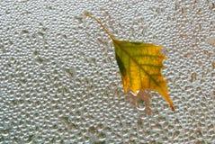 Autumn leaf on  window Royalty Free Stock Image