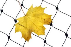 Autumn leaf on a wire fence Stock Images