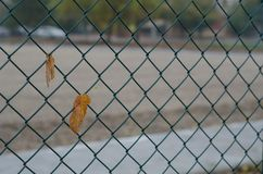 Autumn leaf with wire mesh. Close-up of a lonely yellow leaf stuck in the fence. Autumn in the city park. The background is blurred Stock Photography