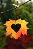 Autumn Leaf With Heart. Stock Photography