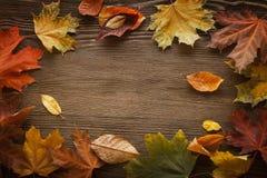 Autumn leaf on wood background Royalty Free Stock Image