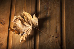 Autumn leaf on wood background Royalty Free Stock Images