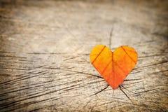 Autumn leaf on wood background. Stock Photos