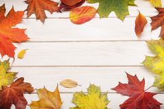 Autumn leaf on wood background Stock Photos