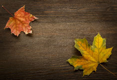 Autumn leaf on wood background & x28;top view& x29; Royalty Free Stock Image