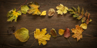 Autumn leaf on wood background & x28;top view& x29; Stock Photos