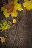 Autumn leaf on wood background (top view) Royalty Free Stock Photos