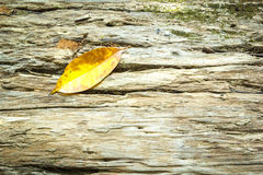 Autumn leaf on wood Stock Photo