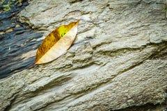 Autumn leaf on wood Stock Images