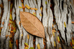 Autumn leaf. On wood table Stock Photos