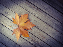 Autumn leaf on the wood table Stock Photography