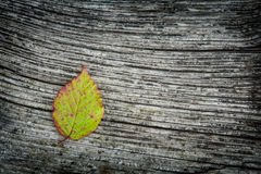 Autumn Leaf On The Wooden Background. Autumn leaf on the old striped wooden background Stock Image