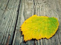 Autumn leaf on wooden background Stock Photography